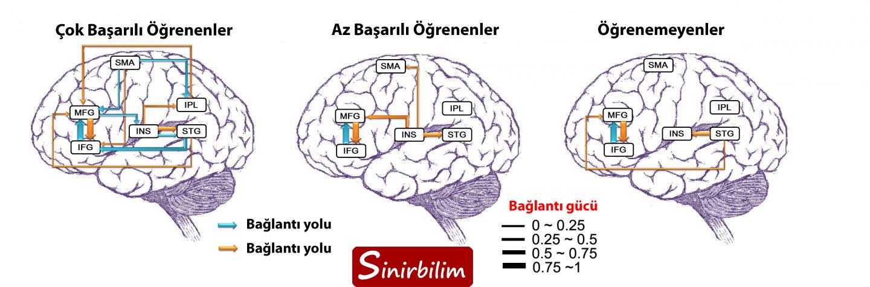 Başarılı Öğrenen Kişilerin Beyin Bağlantıları Farklıdır