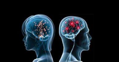 Kadın Beyni ve Erkek Beyni Diye Bir Kavram Yoktur