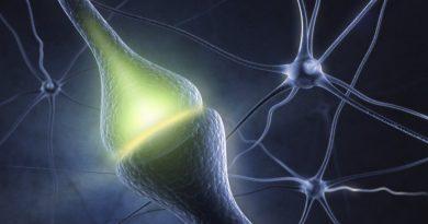 Serotonin Sistemini Baştan Programlayabiliriz