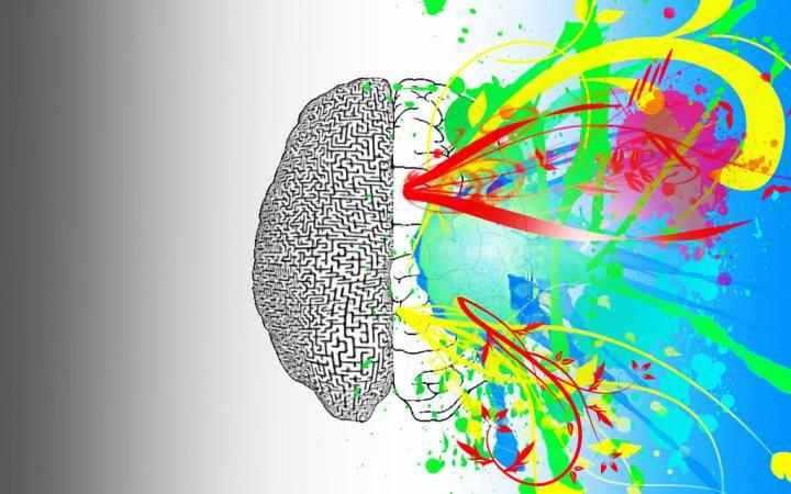 Sağ Beyniniz mi Baskın Sol Beyniniz mi? Cevap: İkisi de Değil