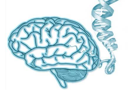 Beynin İşleyişini Anlamak İçin Genler İnceleniyor