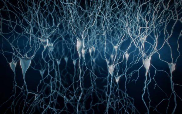 Sinyaller Rastgele Değil Nöron Merkezlerinden Geçiyor