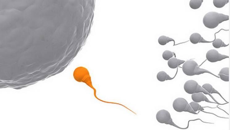 İstemediğiniz Genleri Kovun: Yeni Nesil Spermler