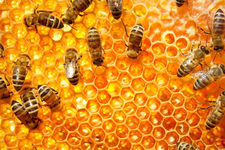 Zamanı Tersine Çevirebilen Arılar