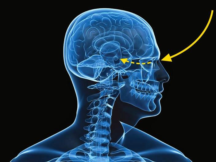 Işık Beynimizi Nasıl Etkiliyor?
