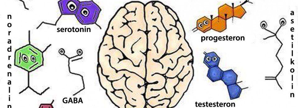 beyindeki nörotransmitterler