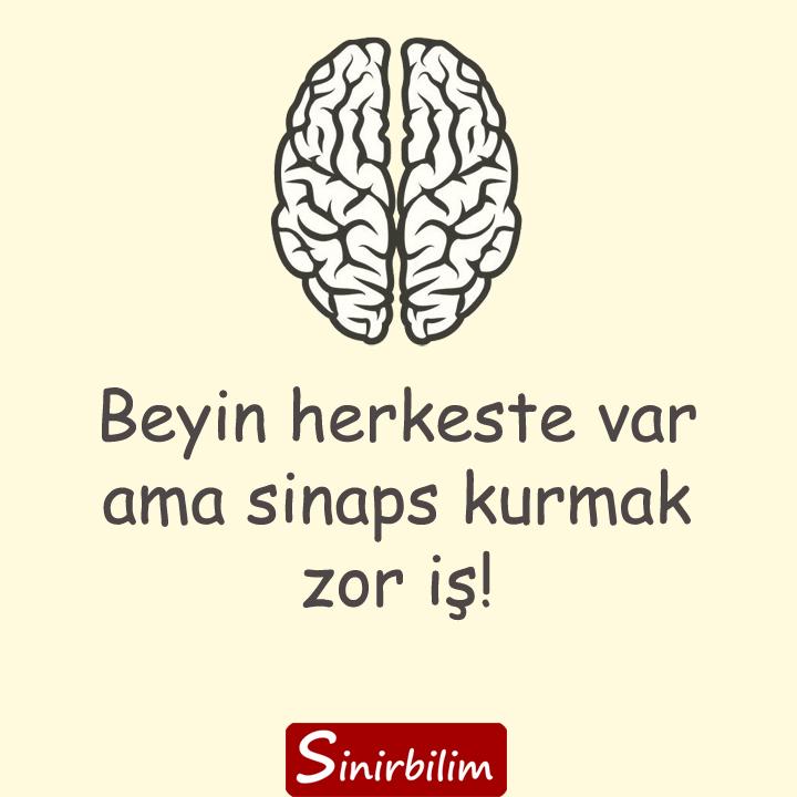 Önemli olan sinapslar