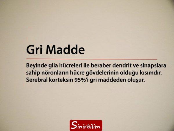 Gri Madde