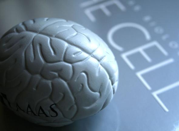 Beyni Geliştirmek İçin Yapmanız Gerekenler