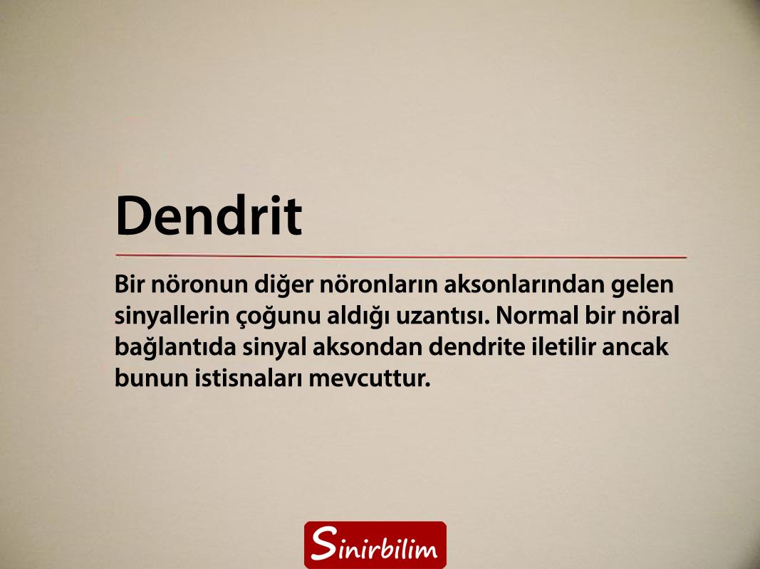 dendrit