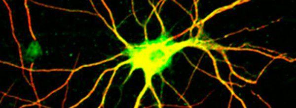 Duyu Nöronları Beyindeki Nöronlar Gibi Hesap Yapabiliyor!