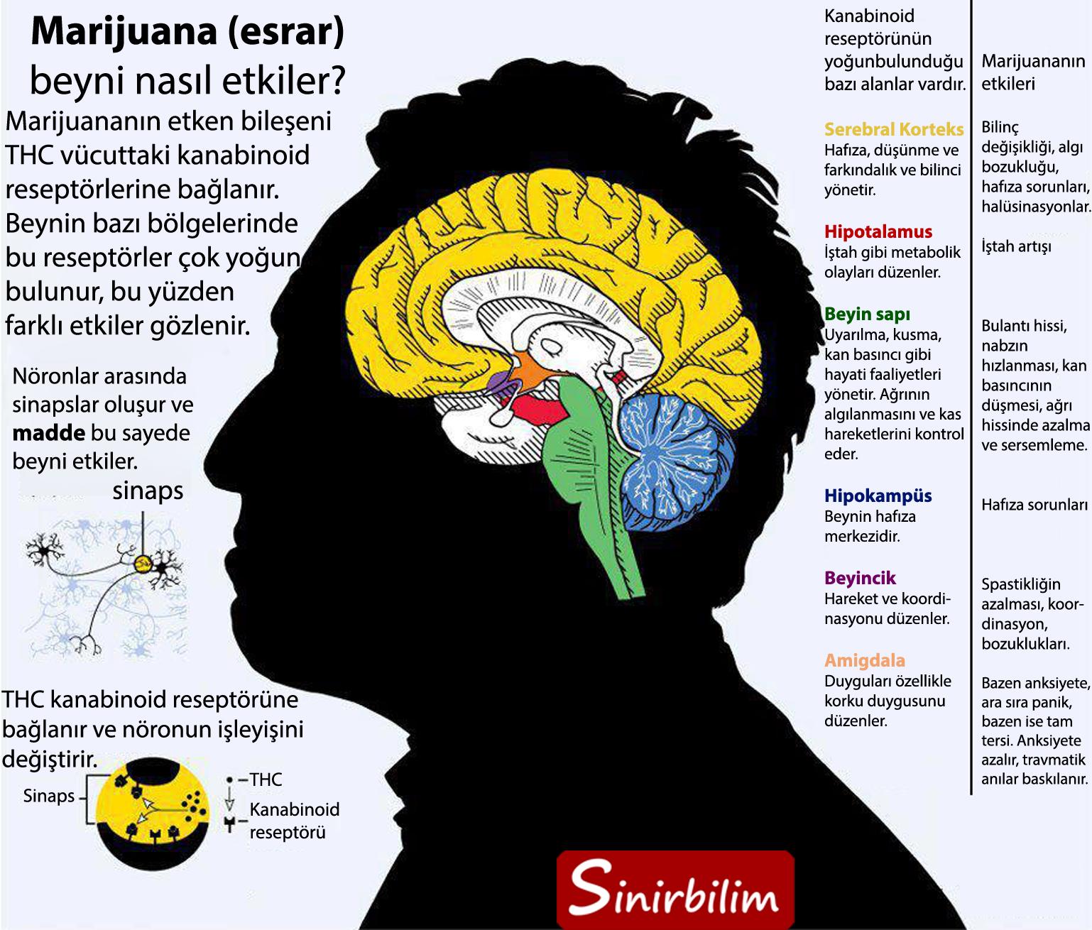 Marijuananın Beyne Etkileri