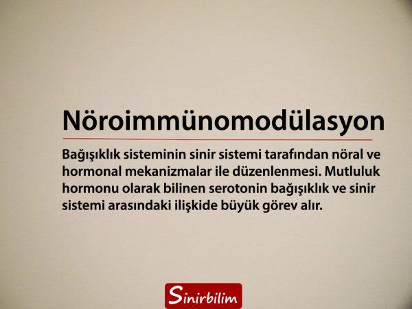 nöroimmünomodülasyon