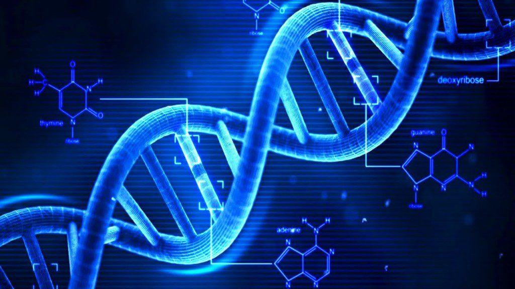 Bizi Çok Zeki Yapabilecek 8 Nükleotid Değişimi
