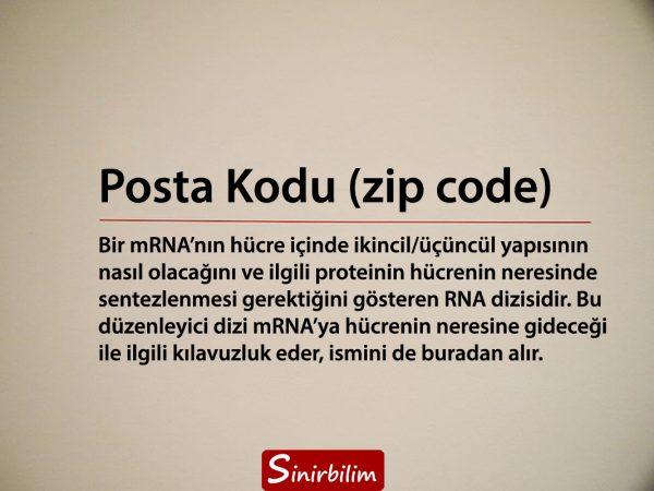 posta kodu