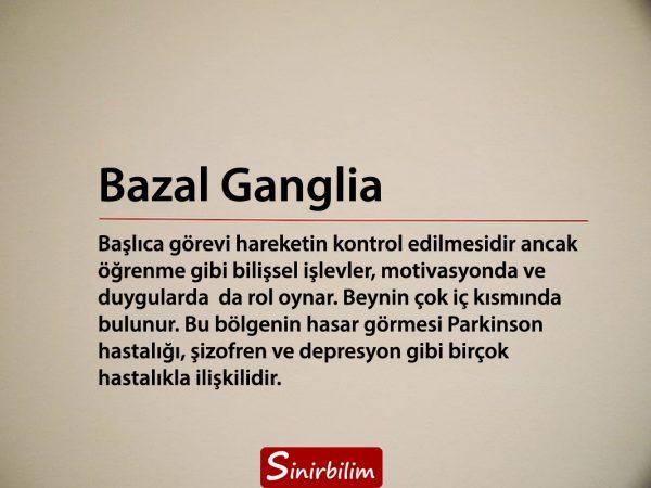 Bazal Ganglia
