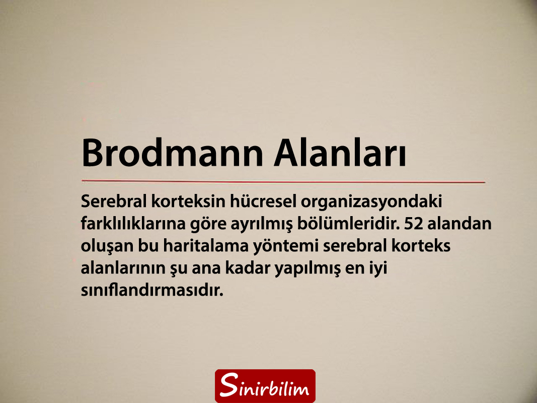 Brodmann Alanları