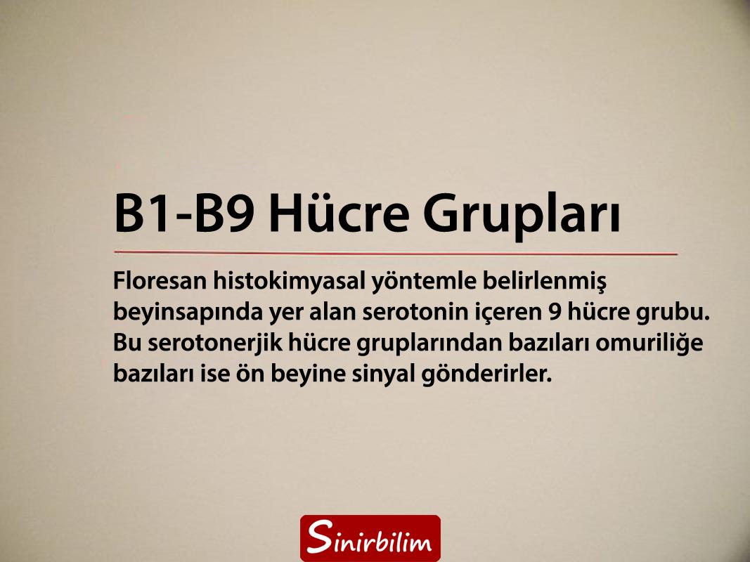 B1-B9 Hücre Grupları