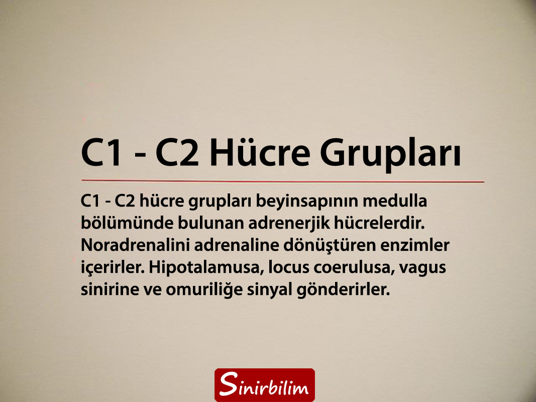 C1 - C2 Hücre Grupları