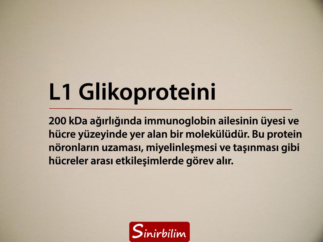 L1 Glikoproteini