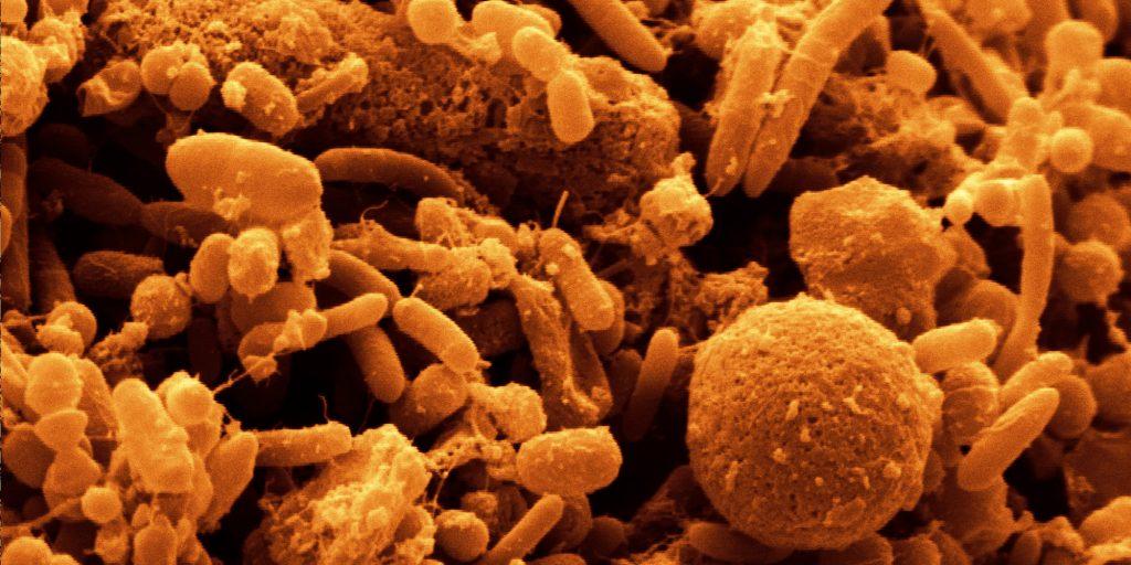 Sindirim Sistemi Bakterileri Nöronların İşleyişini Etkiliyor