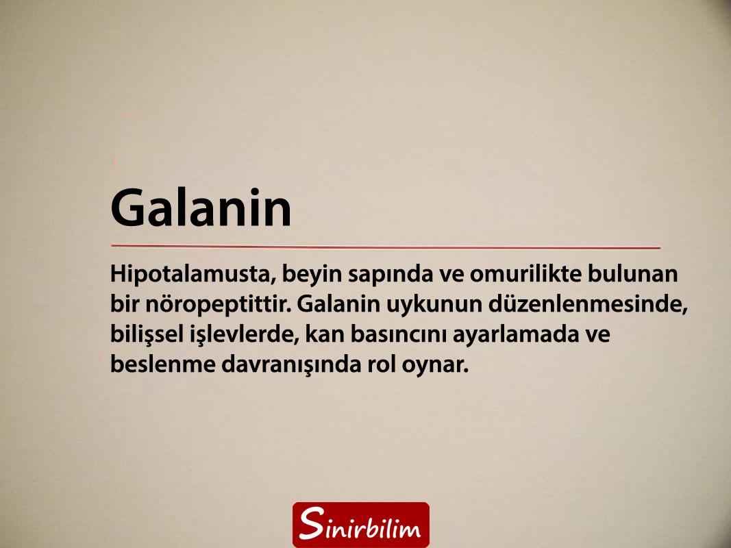 galanin
