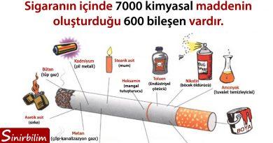 sigaranın bileşenleri