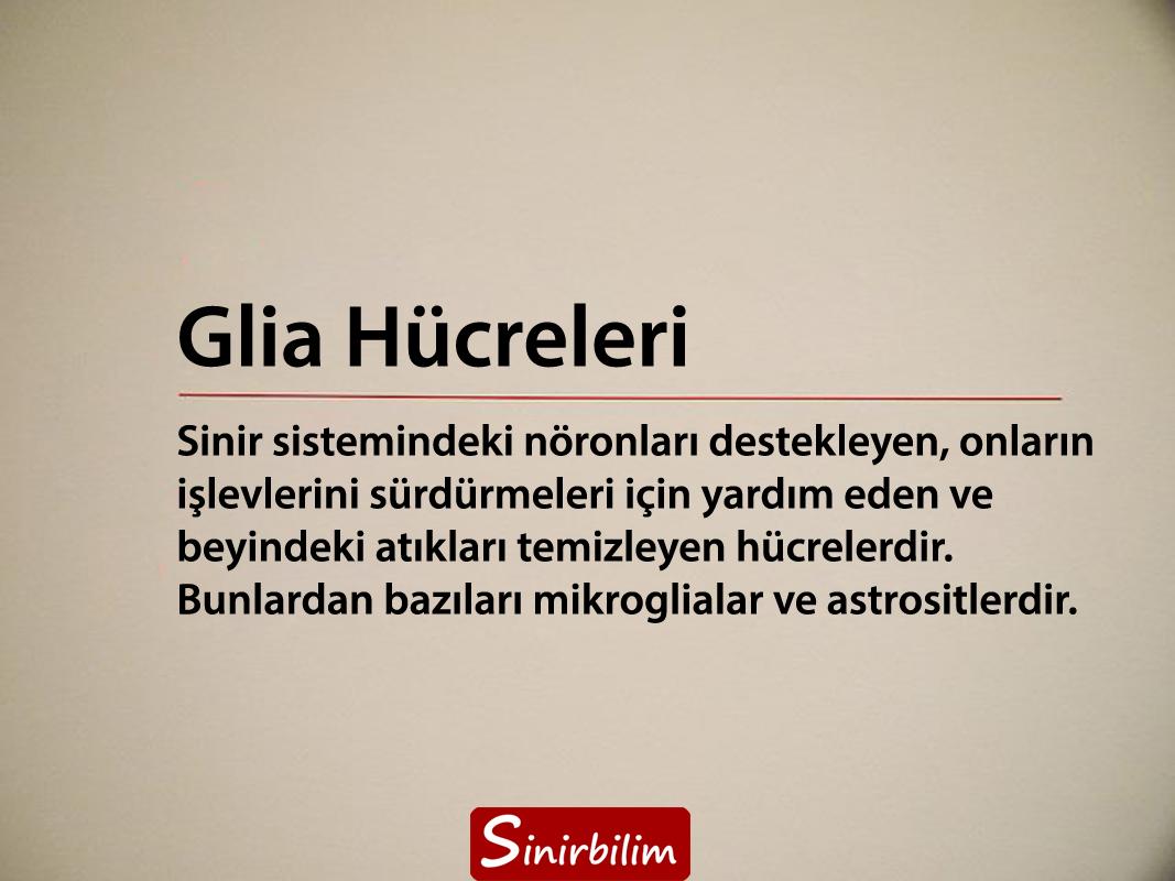Glia Hücreleri
