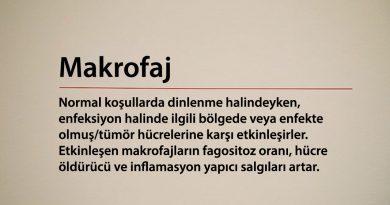 Makrofaj