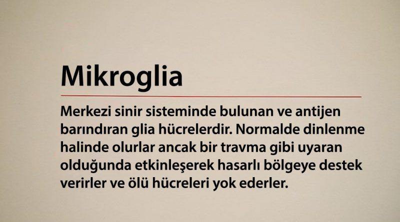 Mikroglia