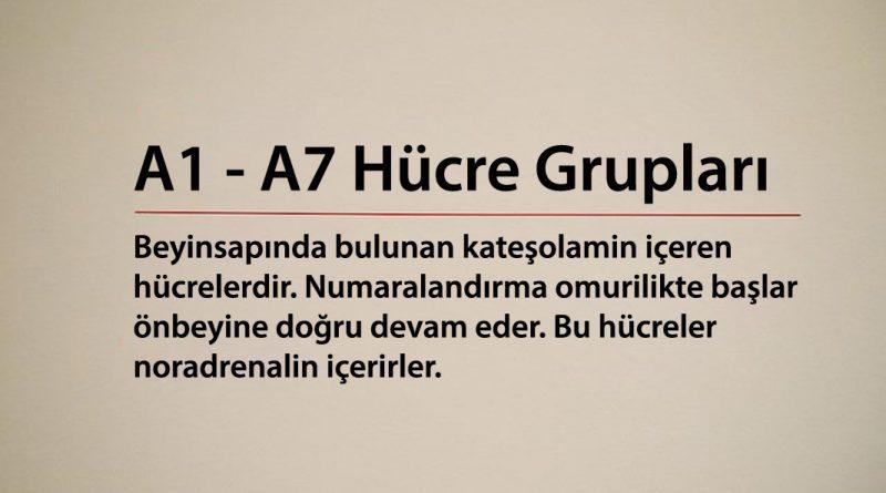 A1 - A7 Hücre Grupları