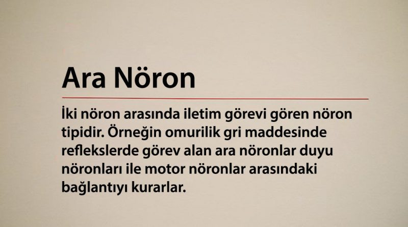 Ara Nöron