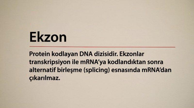 ekzon