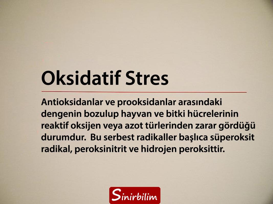 Oksidatif Stres