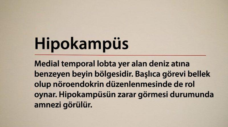 Hipokampus Nedir?