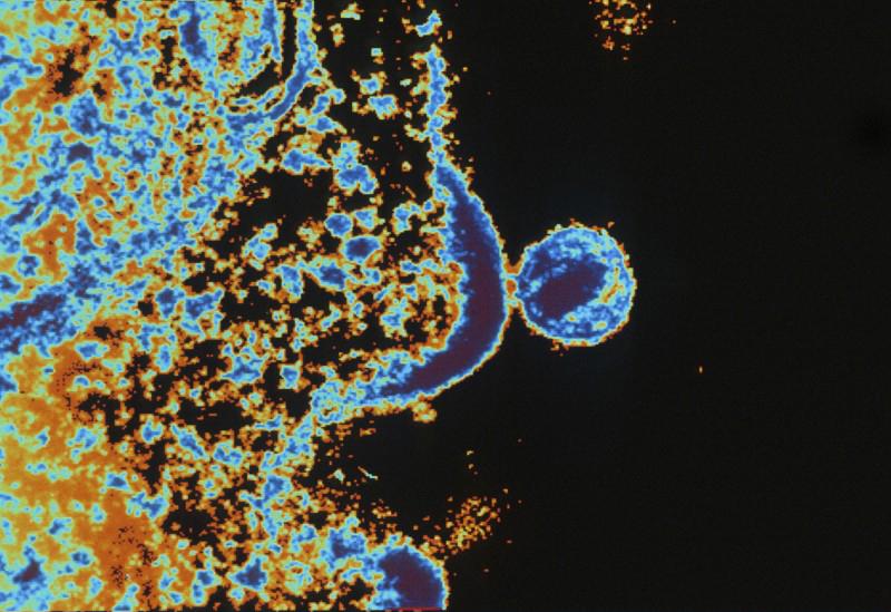 Endoplazmik Retikulum ve Virüsler Arasındaki Özel İlişki