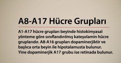 A8-A17 Hücre Grupları