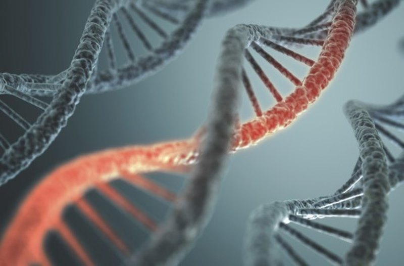 genetik mutasyon