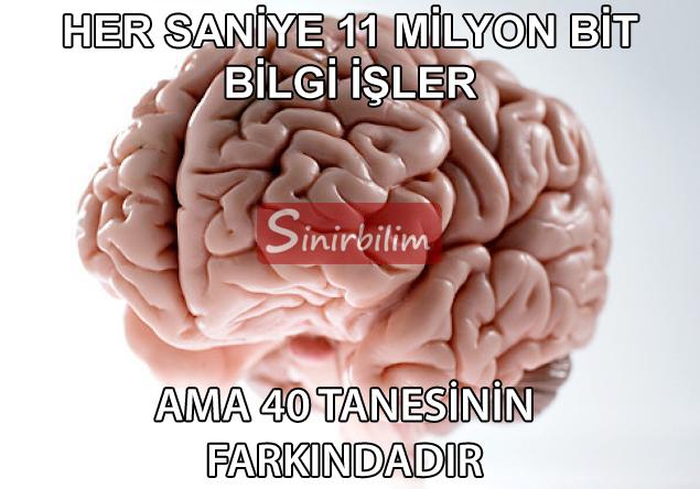 11 Milyon bit bilgi