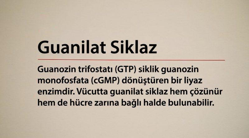 Guanilat Siklaz