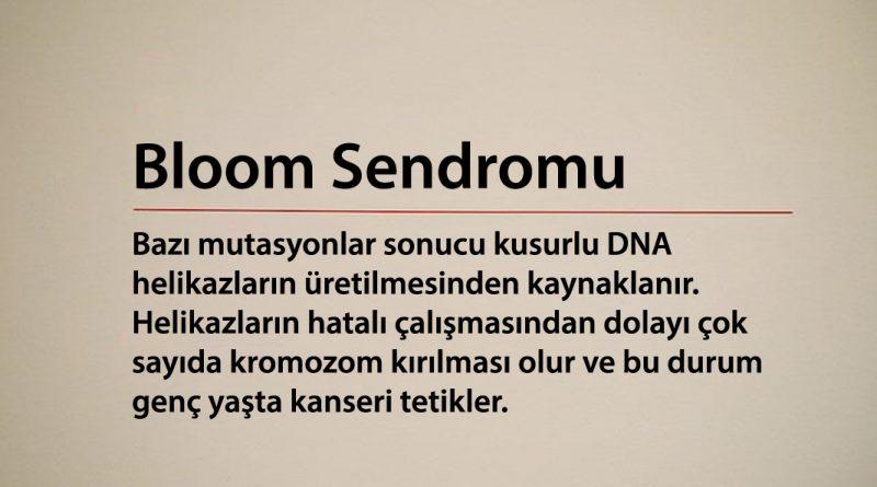 Bloom Sendromu