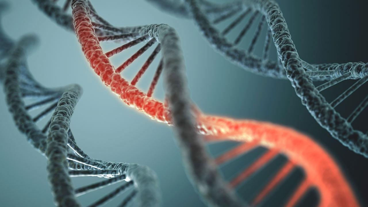 Genomdaki virüsler beynimiz için önemlidir