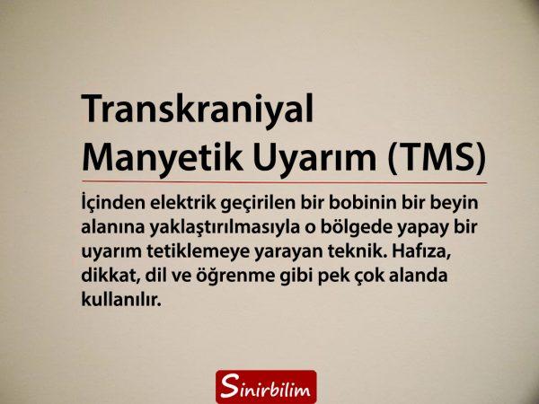 Transkraniyal Manyetik Uyarım