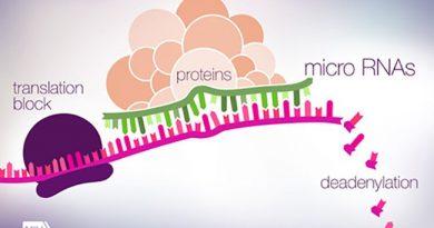 Mikro RNA'lar ve Sinir Sistemindeki Görevleri