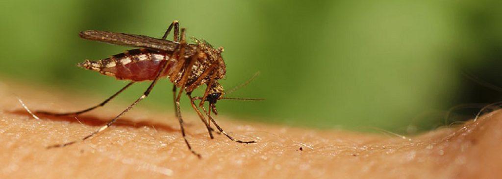 Sivrisinekler Bizi Nasıl Buluyor?
