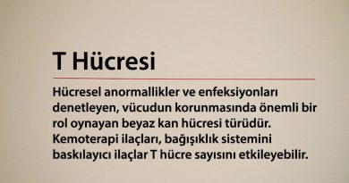 T Hücresi
