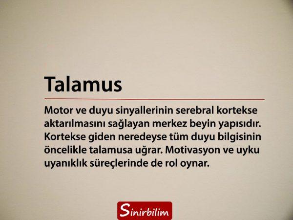 Talamus