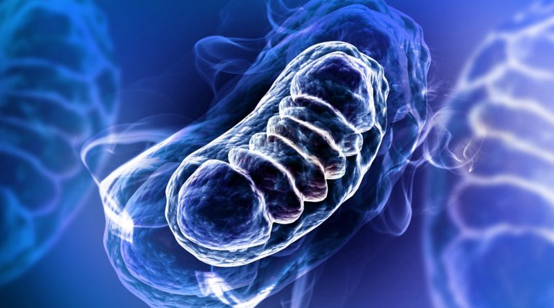 Mitokondriyel DNA Nasıl Oluştu?