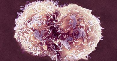 Akciğerler İçin Şaşırtıcı Yeni Bir Rol: Kan yapımı
