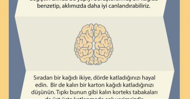 Beyin Büyüklüğü ve Kıvrımları